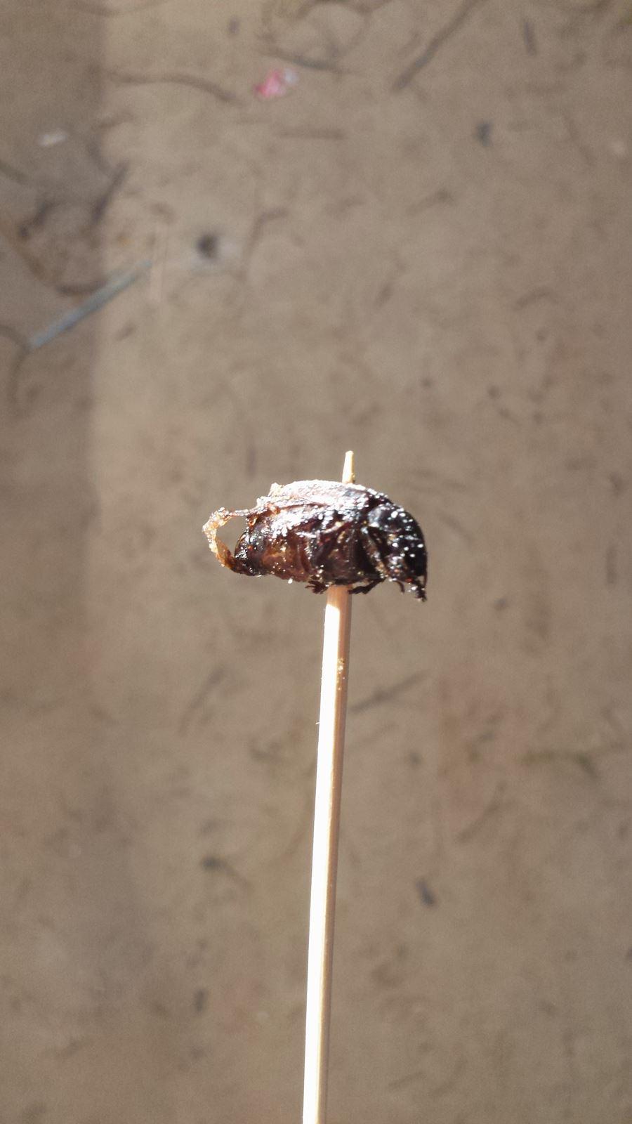Insektensnack am Spieß
