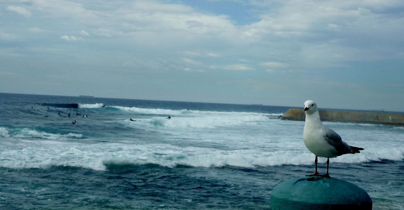 Surf Mentalität