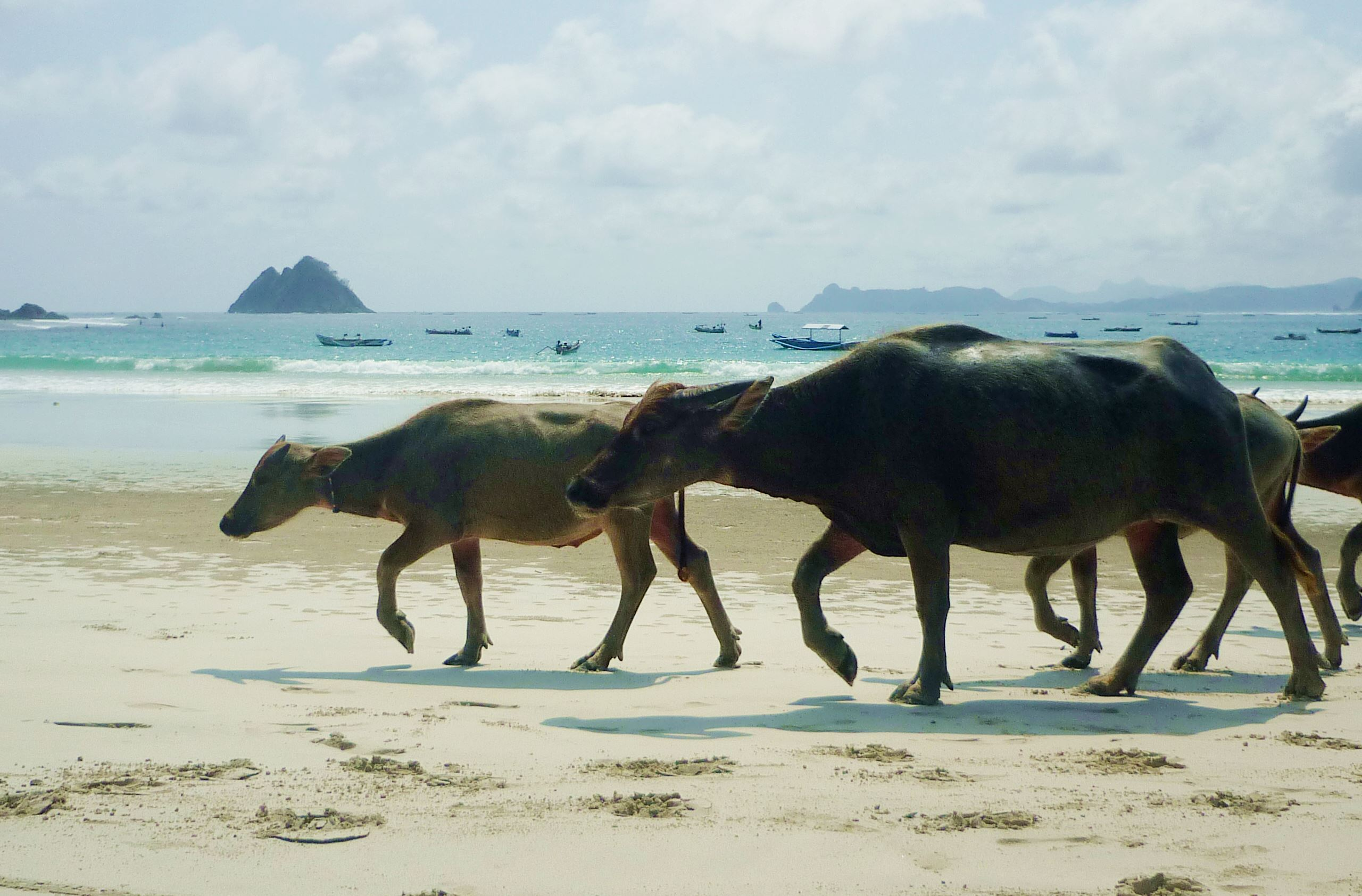 Tiere am Strand