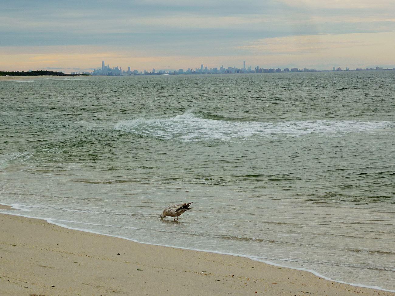 Sandy Hook - Skyline aus der FerneSandy Hook - Skyline aus der Ferne