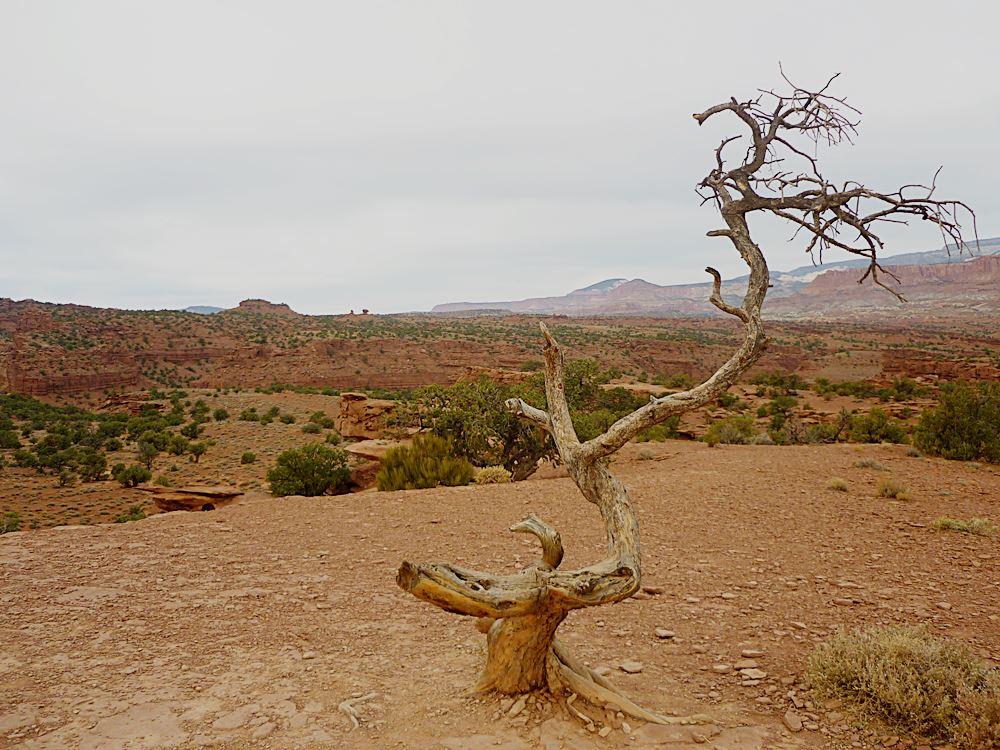 Nationalpark-Utah-Roadtrip