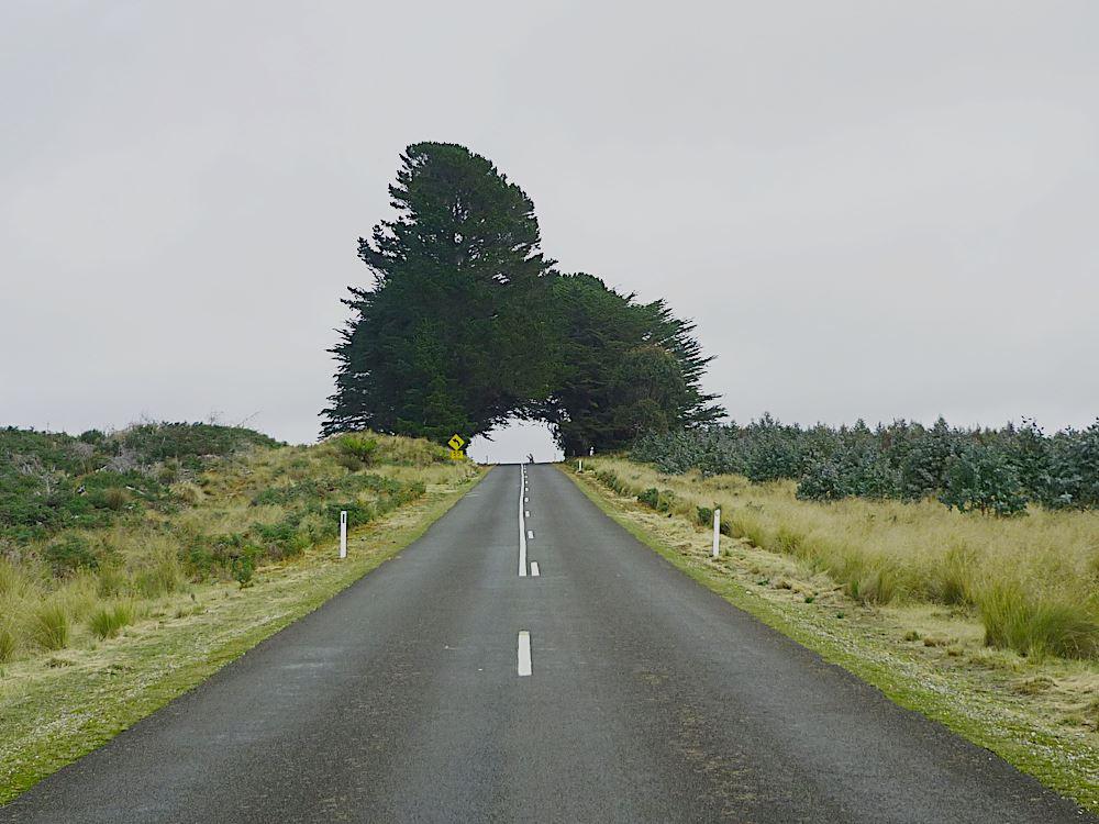strasse-route-weg-im-leben