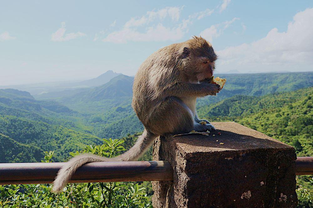 Affen im Black Gorges National Park