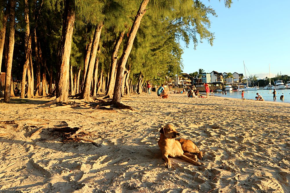 Hundeleben am Strand von Mauritius