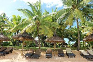 Nickerchen unter einem Palmenmeer