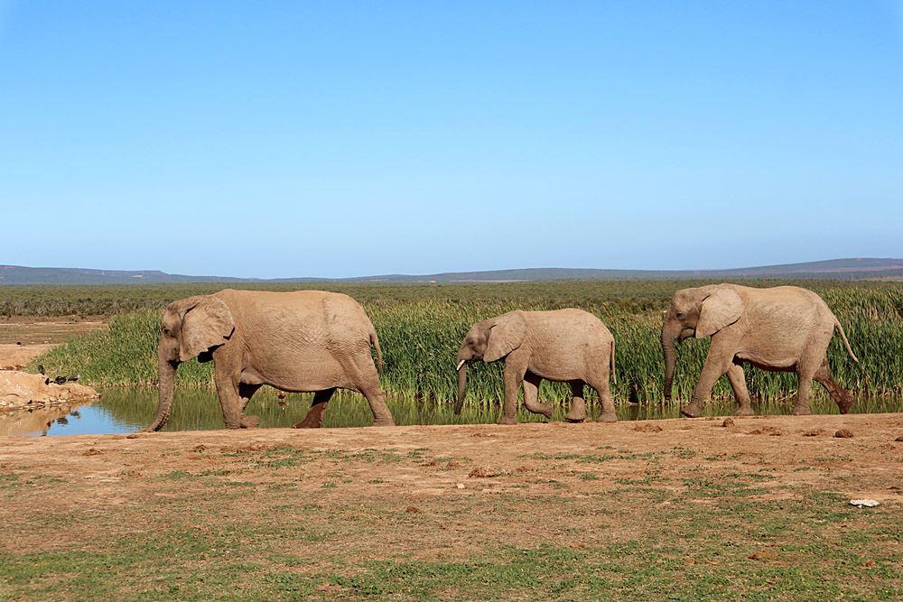 Addo Elephant Park Suedafrika