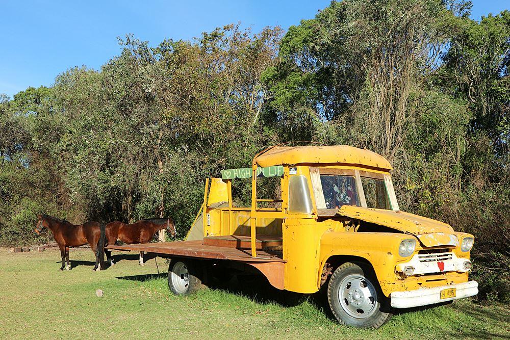Pferde und alter Truck