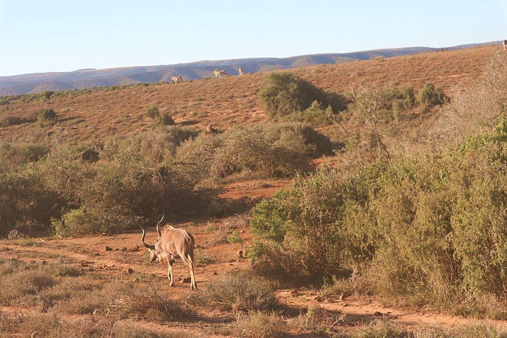 Safari Tour in Suedafrika