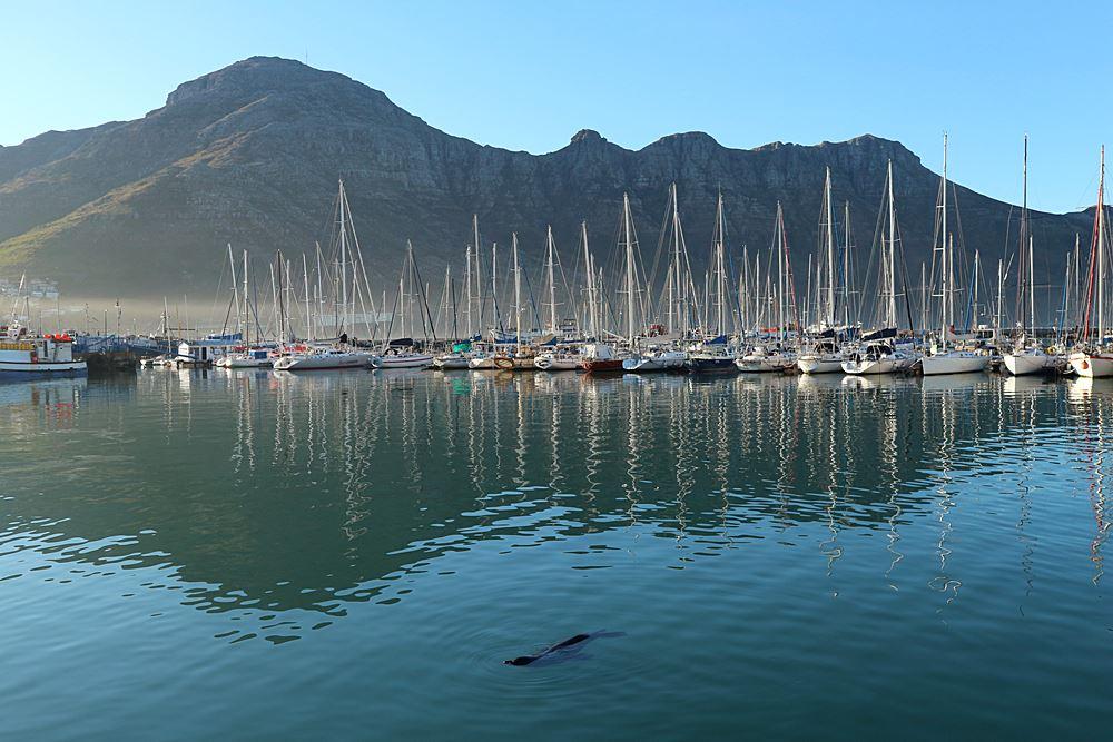 Kapstadt Seehunde