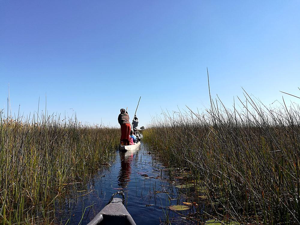 Okavango Delta im Sumpf