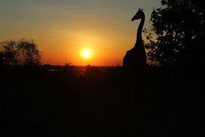 Sonnenuntergang im Chobe National Park