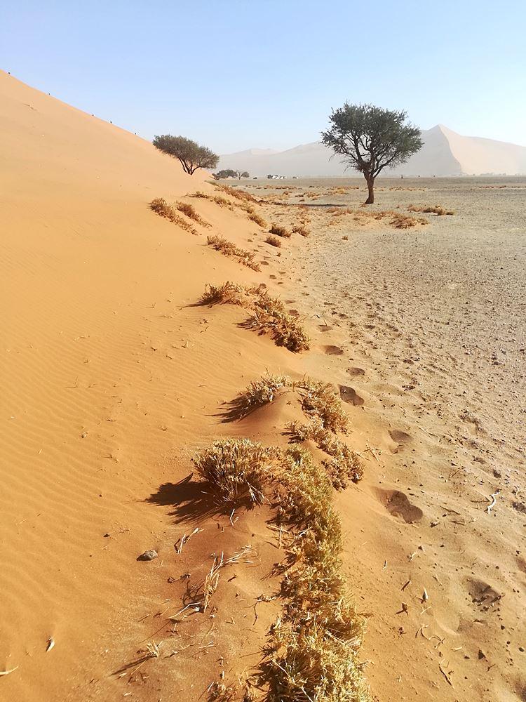 Sandduene in Namib Wueste