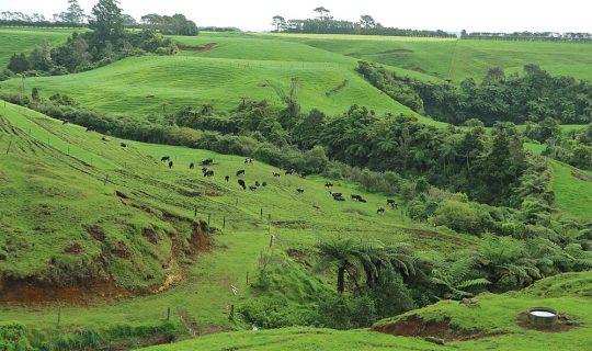 Neuseeland: Von der einsamen Südinsel und der zivilisierten Nordinsel