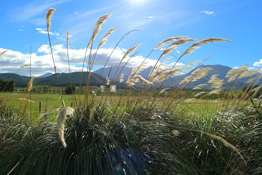Wenn deine Bilder keinen Filter brauchen – Südinsel Neuseeland