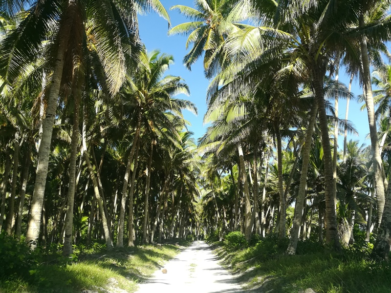 Palmenmeer Savaii