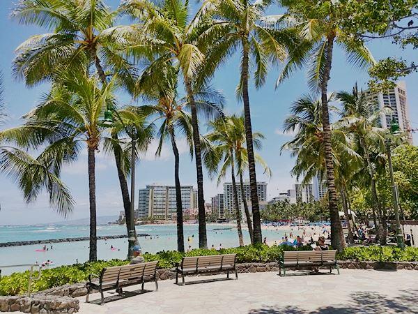 Waikiki Palmen Strand